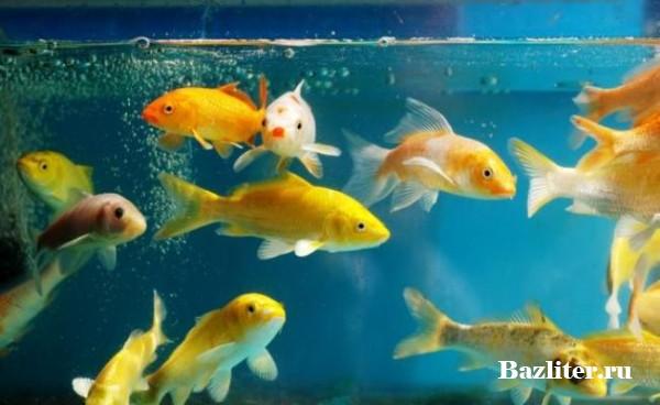Карантин аквариумных рыбок: профилактический и лечебный. Особенности, препараты и процедуры