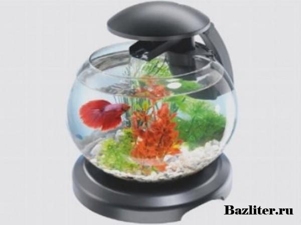 Специальные аквариумы для петушков