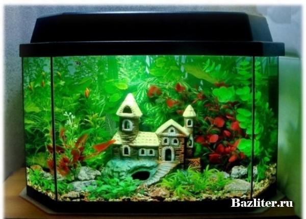 Выбор декора для аквариума