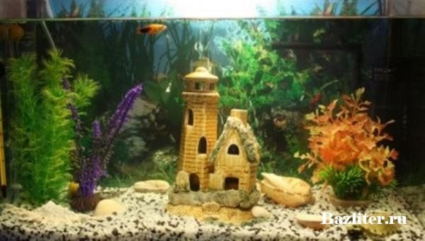 Запуск аквариума для рыбки петушка. Пошаговая инструкция для начинающих аквариумистов
