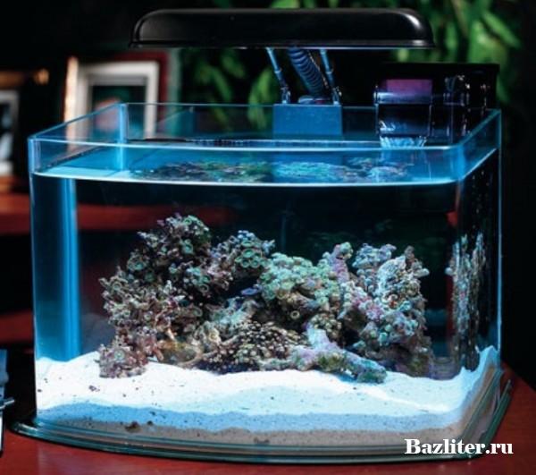 Запуск рыбки петушка в аквариум