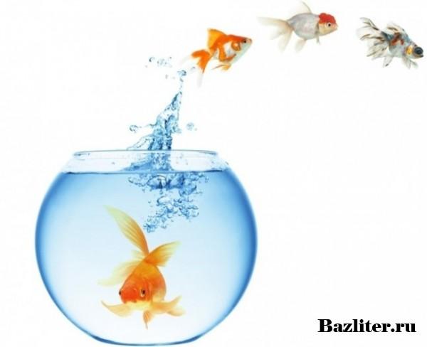Как ухаживать за маленьким аквариумом