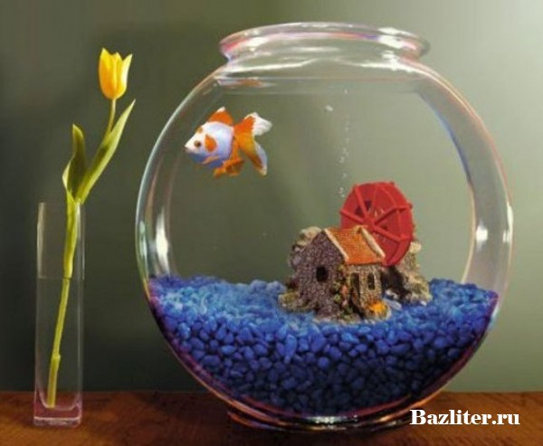 Как ухаживать за маленьким аквариумом? Особенности, частота и секреты эффективной уборки