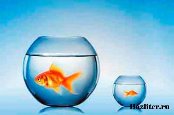 Как заменить воду в аквариуме? Особенности, способы, инструменты, объем и частота обновления