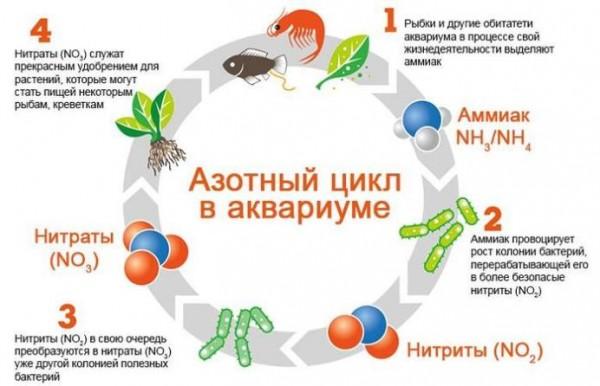 Аквариумная вода для рыбок: основные характеристики и состав
