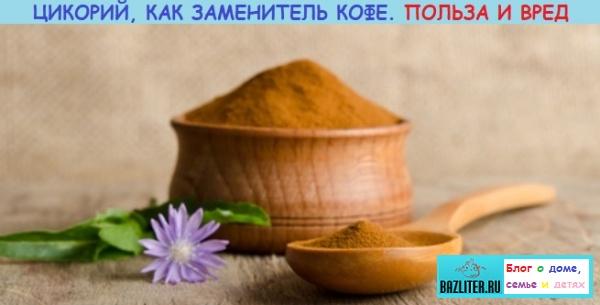 Цикорий, как заменитель кофе. Особенности, вкусовые качества, рецепты, польза и вред