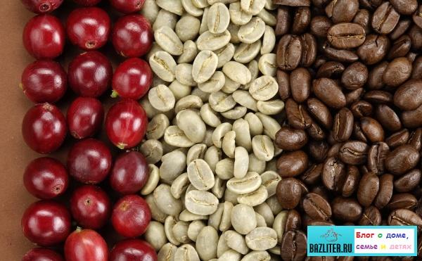 Кофе Робуста (Robusta): особенности, характеристики, вкусовые качества и отличие от арабики