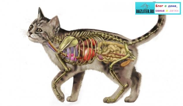 Интересные факты из жизни кошек и котов. Удивительные истории и суеверия