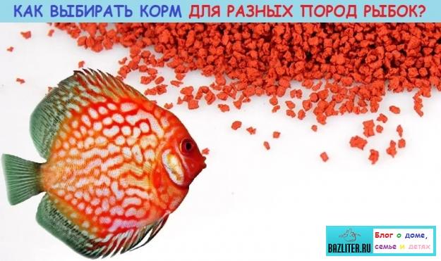 Как правильно выбирать сухой и живой корм для рыбок? Особенности, виды кормов и секреты кормления