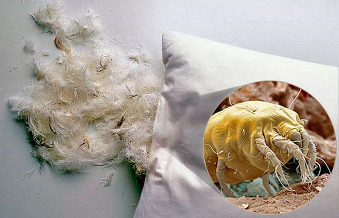 Скрытая угроза: как избавиться от пылевых клещей
