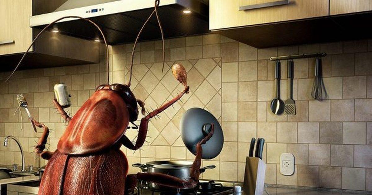 Тараканы в доме. Как бороться с тараканами?