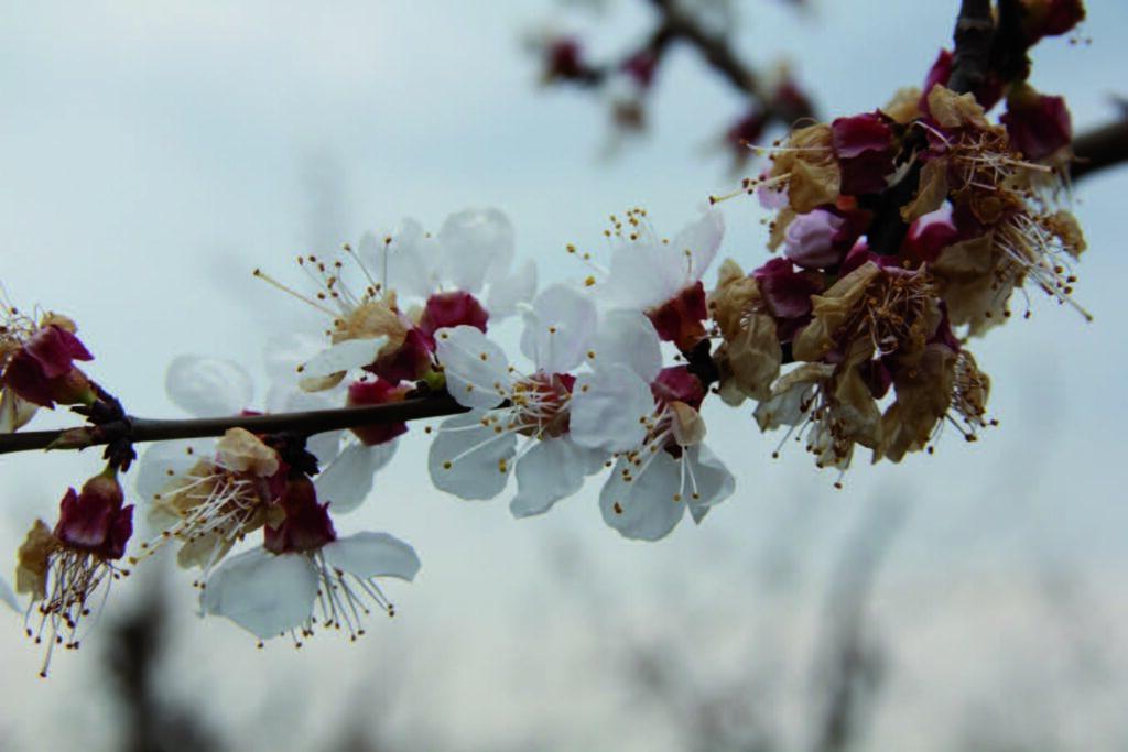 Плодовая гниль (монилиоз) что делать