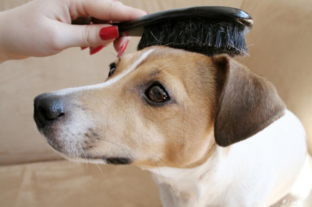 Правила гигиены и ухода за собакой
