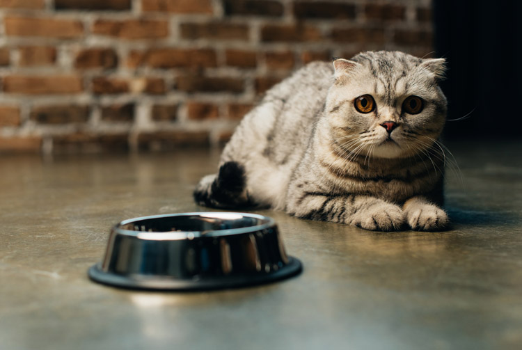 Самые распространенные ошибки в кормлении кошки